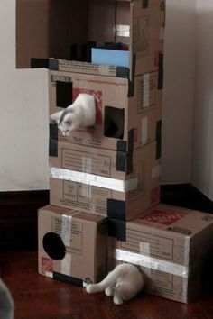 cats playing and boxes | Imagenes sobre Ideas de Casas para gatos