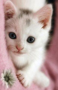 I just wanna reach that flower    | cats | | cute cats | #cat #cutecats https://biopop.com/