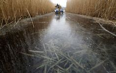 A worker drives a reed mower at a frozen water expanse at Neusiedler See (Lake Neusiedl) near Illmitz, some 80 kilometers (50 miles) east of Vienna, Austria, on February 3, 2012. (Reuters/Herwig Prammer)