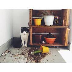 """Ou quando ele faz aquela cara de """"já tava assim quando eu cheguei"""".   30 imagens reais demais para todo mundo que vive com um gato"""