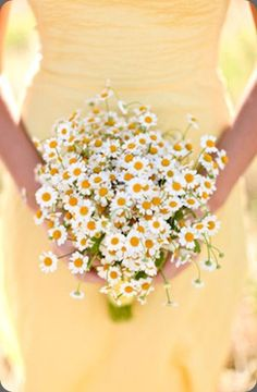 The bridesmaid bouquet that would go best with your sunflowers is bundles of camomile daisies. I could do these for $35 each!