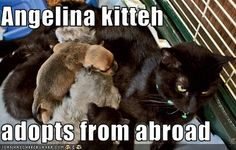 Angelina kitteh  adopts from abroad