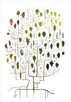 "OAK TREE ""Signed illustration by Swedish designer Lotta Olsson"" (from finelittleday) Art And Illustration, Illustrations, Graffiti, Illustration Botanique, Design Art, Graphic Design, Oak Tree, Tree Tree, Tree Leaves"