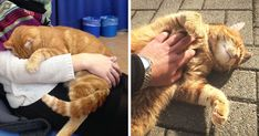 This Cat Comes To University Every Day To Help Students With Cuddles | Bored Panda