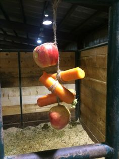 Horse Boredom Buster! Make it an organic horse boredom buster though... :)