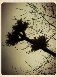 . Dandelion, Flowers, Plants, Dandelions, Plant, Taraxacum Officinale, Royal Icing Flowers, Flower, Florals
