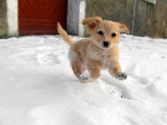 """""""Yay"""" snow!"""