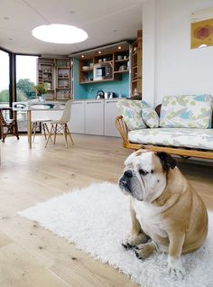 Spotted: Bulldog in a HiveHaus - Dog Milk