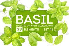Basil leaves on white background by Max Lashcheuski on @creativemarket
