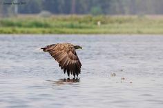 _Q2E0500 Danube Delta, Boat Tours, Bird Watching, Landscape, Animals, Scenery, Animales, Animaux, Animal