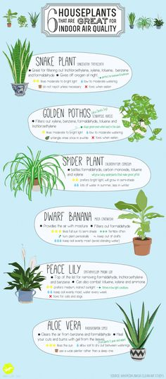 house of thol: 6 Houseplants that are great for indoor air quality