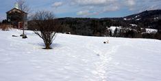 Situé aux abords de St-Johnsbury, au Vermont, Dog Mountain est un domaine de 150 acres où non seulement les chiens sont les bienvenus, mais ils peuvent courir sans laisse, se baigner, jouer et rencontrer leurs congénères pendant que leurs maîtres… Vermont, Chapelle, Jouer, Snow, Dogs, Outdoor, Pathways, Mountains, Middle