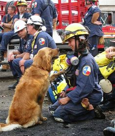 :  - Last Living 9-11 Ground Zero Search Dog Returns to World Trade Center Site today putting out a welcoming paw...