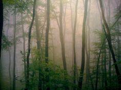 Mist, Trees.