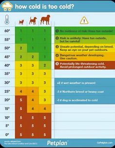 Keep your dogs safe this winter