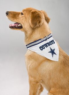 Dallas Cowboys Dog Collar Bandana Pittsburgh Steelers Merchandise c86d4cbc7