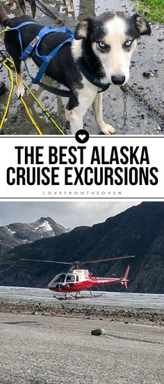 Learn all about the best Alaska excursions for your Alaskan cruise! Includes Juneau, Skagway, Ketchikan, Glacier Bay, Victoria and Seattle. Alaskan Cruise Excursions, Best Alaskan Cruise, Alaska Cruise, Alaska Travel, Alaska Trip, Cruise Formal Night, Glacier Bay Alaska, Ketchikan Alaska, Visit Alaska