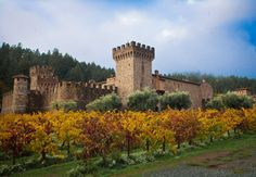The fortress: Castello di Amorosa. This is a beautiful time of the year.