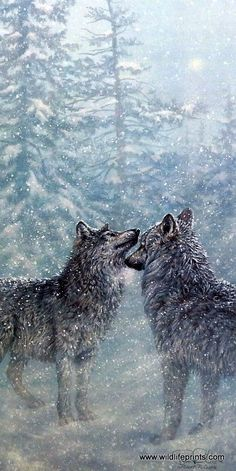 "The snowflakes fall from the sky all around the pine tree forest as these two wolves meet up and sniff each other. Image Size 13"" x 28"""