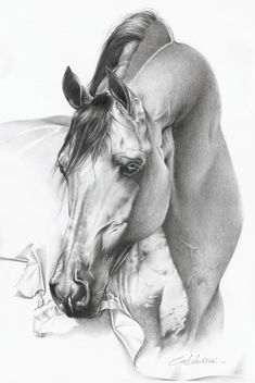 'Arabian Horse' by ~CaldeiraSP on deviantART     ...eating the paper this is drawn on...