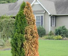 How to Landscape Front Yard   HouseLogic Curb Appeal Ideas