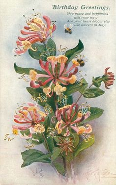 "Honeysuckle with bumble bees ~ 1920 birthday postcard  (According to the Victorian ""language of flowers"" honeysuckle = devoted affection, bonds of love)"