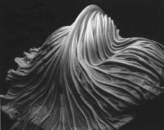 Edward Weston, Cabbage Leaf, California, USA, 1931, Gelatin silver print, 7 =6 x 9 /V. [Gift of T.J. Maloney. © 1981 Center for Creative Photography, Arizona Board of Regents. Digital Image © The Museum of Modern Art/Licensed by SCALA/Art Resource, New York