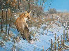 Winter-Red Fox by Michael Sieve