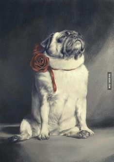 Funny pictures about Majestic as Pug. Oh, and cool pics about Majestic as Pug. Also, Majestic as Pug. Pug Photos, Pug Pictures, Pug Pics, Baby Animals, Cute Animals, Pug Mug, Fu Dog, Pugs And Kisses, Silly Dogs