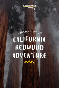 There are many places to see big trees in California, but the redwoods on the rugged northern coast are particularly spectacular. Whether you have two hours, a day, or a long weekend -- choose from three itineraries and make your California redwood dreams a reality.