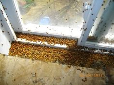 Get rid of an invasion of ladybirds with these 4 ultra efficient methods - Granny's Tips