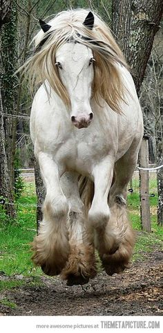This horse is so magnificent, it just amazes me everything I see this picture.