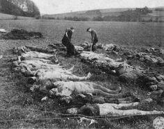 Hergenheim, Germany, 1945, Bodies of Jewish women before burial.