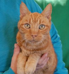 Mumford, a noble boy abandoned at 15 years of age, needs a hero ..... http://nevadaspca.blogspot.com/2013/11/i-am-wise-enough-to-know-that-being.html