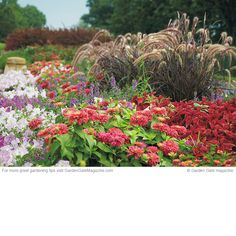 Summer stunner | Get tons of easy-care color with these heat-loving annuals and tender perennials.  Neptune Mix petunia, Archangel® Purple angelonia, 'Magellan™ Coral zinnia, 'Rubrum' purple fountain grass, 'Molten Orange' coleus