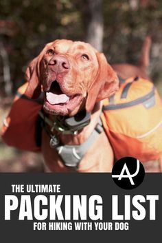 Dog Hiking Gear, Hiking Training, Camping Gear, Camping Hammock, Camping Hacks, Dog Backpack, Hiking Backpack, Road Trip With Dog, Hiking Essentials