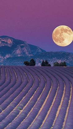 Full Moon, Plateau de Valensole Alps Provence in France Beautiful Moon, Beautiful World, Beautiful Places, Stars Night, Belle France, Shoot The Moon, Lavender Fields, Lavander, Lavender Blue