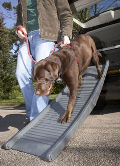 PetSTEP Tote'N Store Folding Pet Ramp * To view further for this item, visit the image link. (This is an affiliate link) #DogLovers