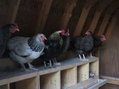 Roosting and Nesting Boxes Nesting Boxes, Raising Chickens, Rooster, Bird Houses, Nests, Chicken Coops, Chicken