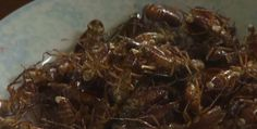 Eating cockroaches in China: Healing and delicious