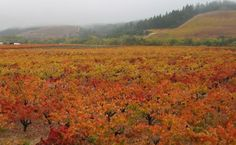 Yum! Roessler Cellars fabulous wine will be flowing at EDK at #GFGA kick off party on March 23rd 8-11pm.