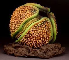 seeds and pods - Google Search