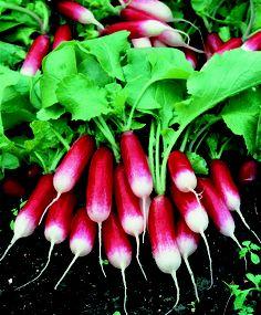 radishes.