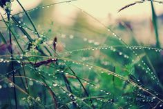 raindrops: by Kristin