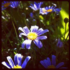 #blue #flavor