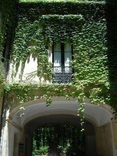 Trepadeiras para Muros e Grades aumentando o verde no jardim - FazFácil