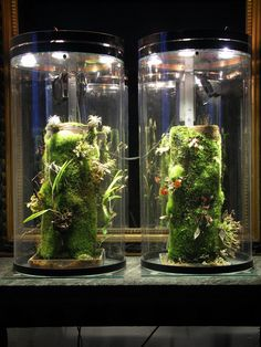 I'm planning to set up a nano-vivarium to grow moss and ferns indoor like shown in the picture below. My question is what kind of light is best or which lamps should I use? Small Garden Tools, Garden Tool Storage, Small Space Gardening, Indoor Gardening, Balcony Gardening, Terrace Garden, Vivarium, Indoor Grow Lights, Best Led Grow Lights