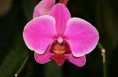 Afbeeldingsresultaat voor orchids