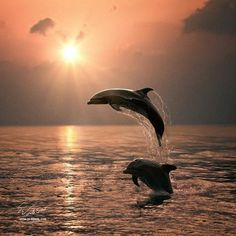 ❤ One of My Favorite Things: Dolphins. Celestiol Dolphins by Vitaliy Sokol Orcas, Beautiful Creatures, Animals Beautiful, Water Life, Ocean Creatures, Tier Fotos, Sea World, Ocean Life, Marine Life