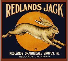 Redlands Jack Rabbit Orange Citrus Crate Label Art Print